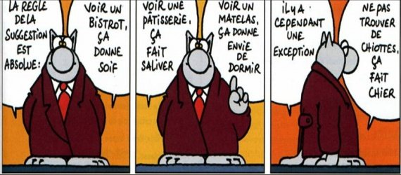 dicton-le-chat